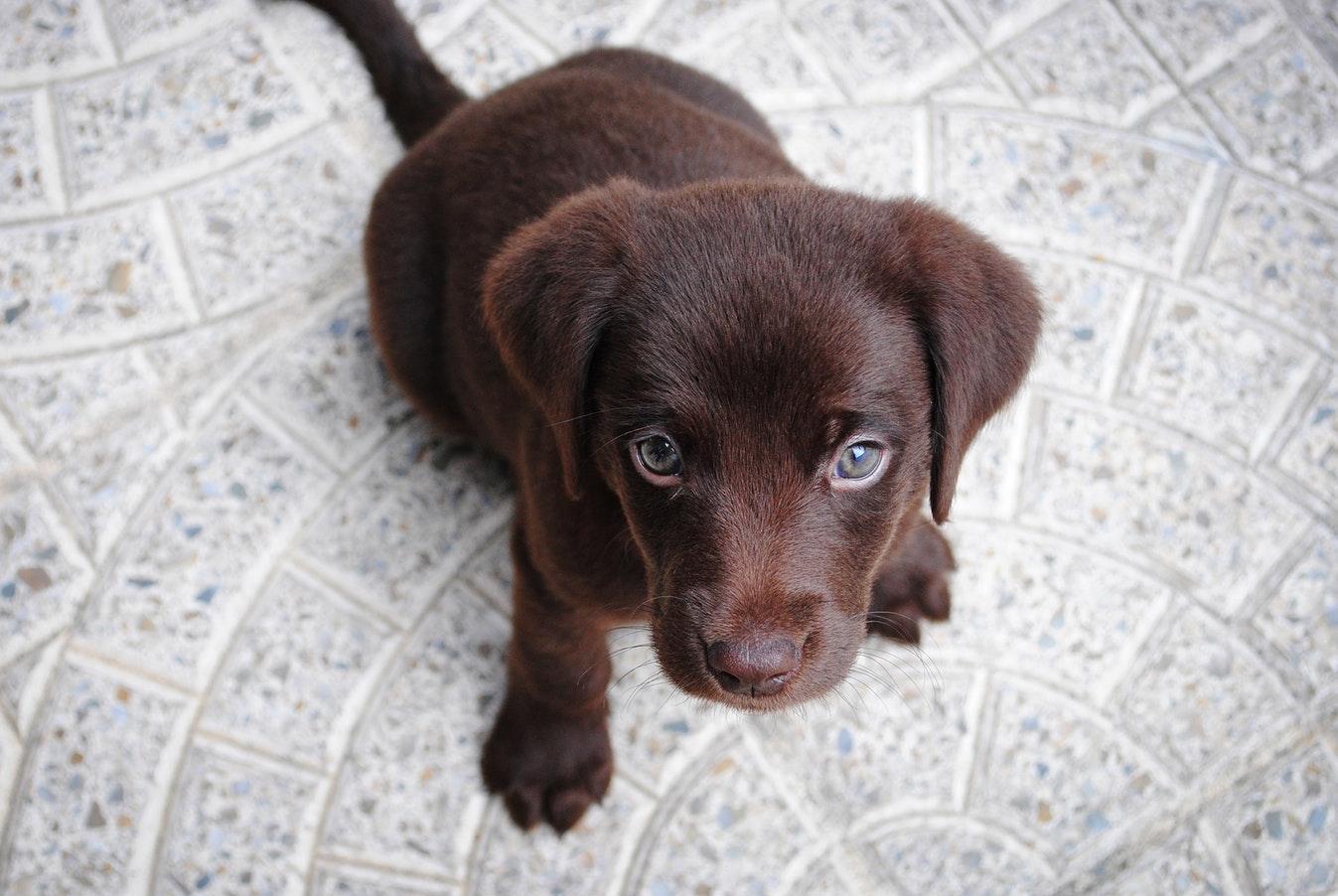 犬のしつけはいつから始める?しつけの基本を知っておこう!