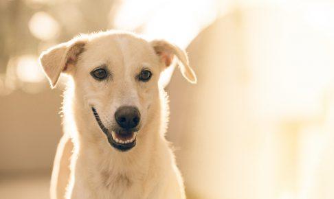 犬のしつけを英語でチャレンジ!そのメリットとは?デメリットはある?