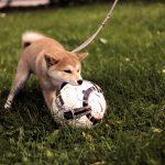 犬のしつけブログ★おすすめを紹介