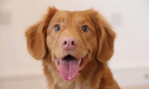 埼玉に住んでる飼い主さん必見!埼玉の犬のしつけ教室のおすすめ