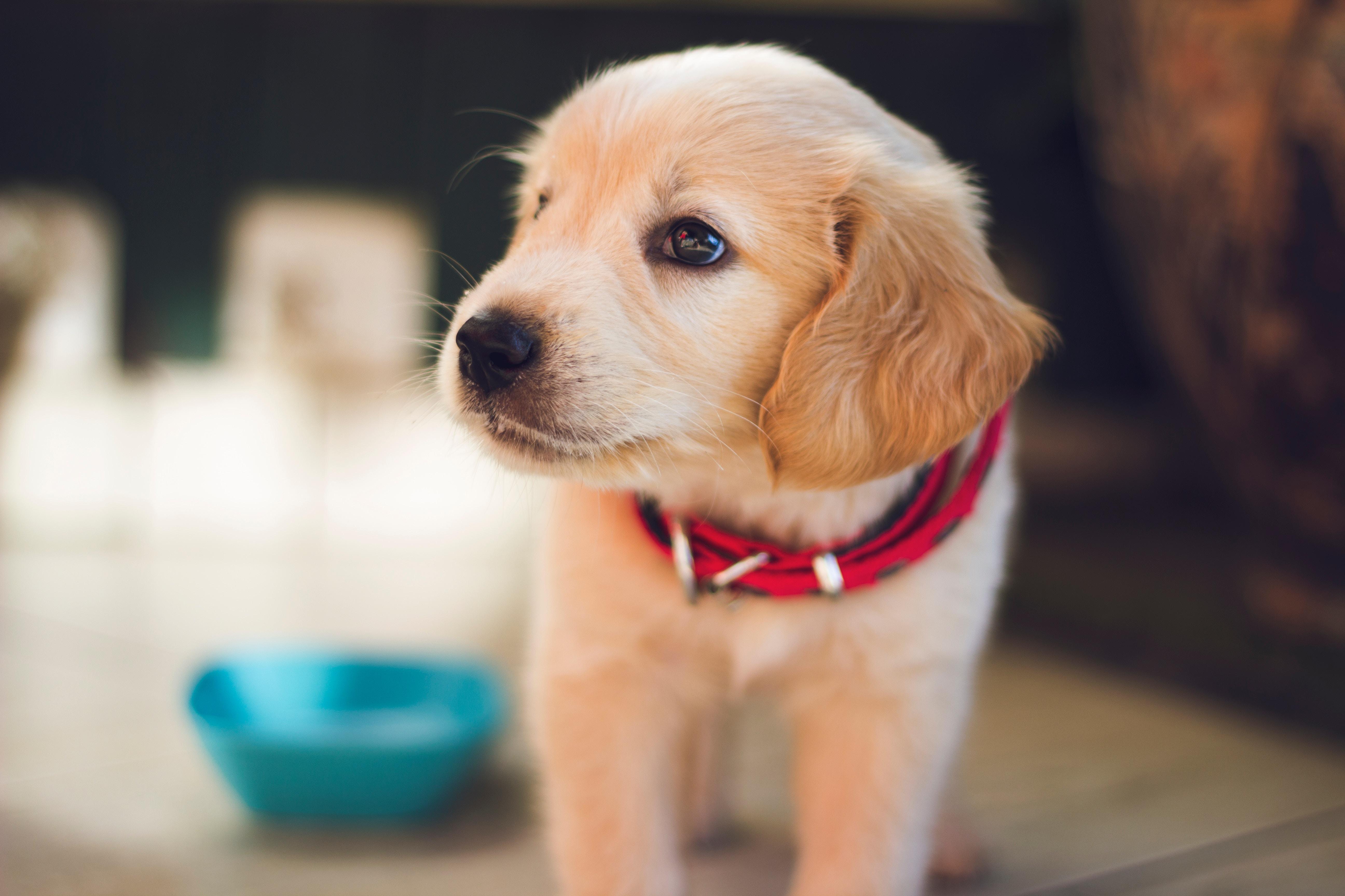 大阪に住んでる飼い主さん必見!大阪の犬のしつけ教室のおすすめ