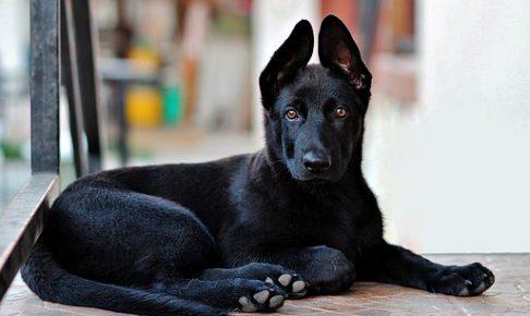 ドイツ人は犬のしつけが上手い??噂のドイツ式の犬のしつけ方法を大公開!!