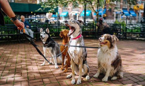 静岡に住んでる飼い主さん必見!静岡の犬のしつけ教室のおすすめ
