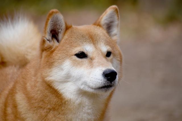 犬の飛びつき癖で困っている飼い主様必見!飛びつき癖を直すしつけの方法をご紹介!