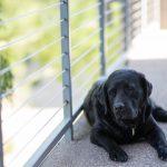「待て!」愛犬に待てをしつけるときの、簡単なポイントをご紹介♪