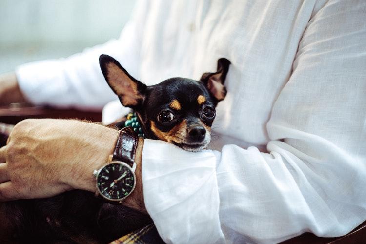 愛犬との関係を壊さない怒り方とは?やってはいけない注意点と正しいしつけの仕方を身につけよう!