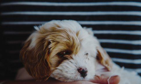 愛犬に「おいで」をしつける方法とは?誰でも簡単にできる方法教えます!